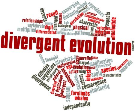 関連するタグと条件分岐進化の抽象的な単語雲