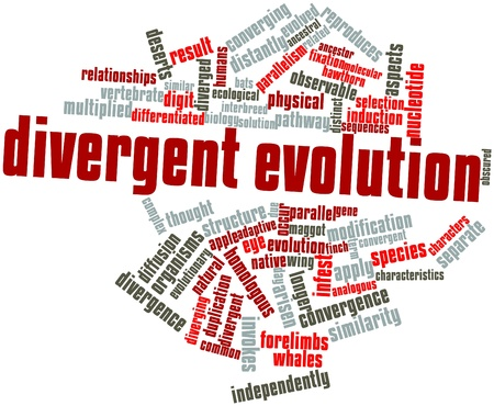 Abstract word cloud for Divergent evolution with related tags and terms Stock Photo - 16498546