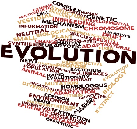 Abstract word cloud for Evolution with related tags and terms
