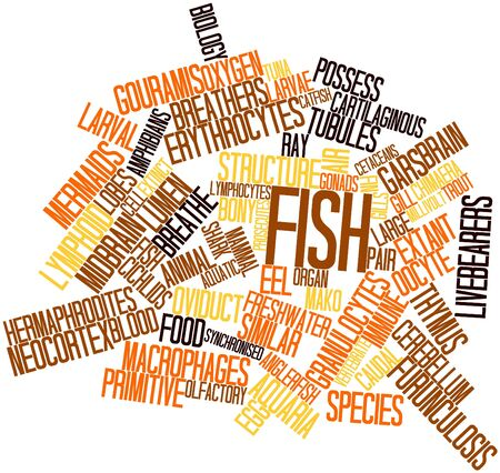 bullhead fish: Abstract word cloud for Fish with related tags and terms