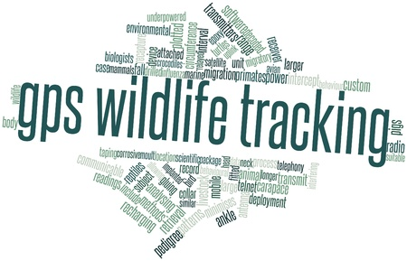 intercept: Abstract word cloud for GPS wildlife tracking with related tags and terms