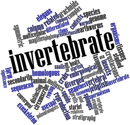 contexts: Abstract word cloud for Invertebrate with related tags and terms
