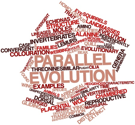 similarity: Abstract word cloud for Parallel evolution with related tags and terms