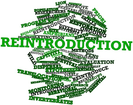 introductions: Abstract word cloud for Reintroduction with related tags and terms