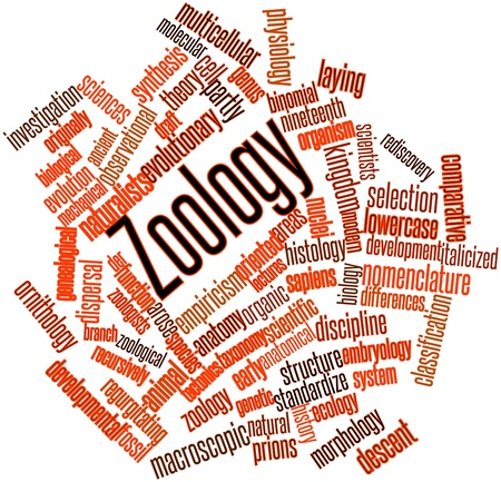 Abstract word cloud for Zoology with related tags and terms Stock Photo - 16499314