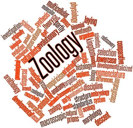 groupings: Word cloud astratto per Zoologia con tag correlati e termini