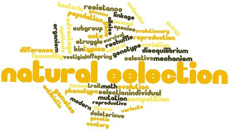 Abstract word cloud for Natural selection with related tags and terms Stock Photo - 16499388