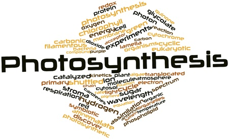 photosynthesis: Abstract word cloud for Photosynthesis with related tags and terms