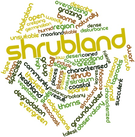 transitional: Abstract word cloud for Shrubland with related tags and terms