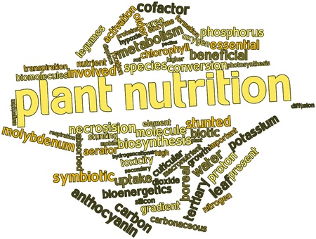 urea: Abstract word cloud for Plant nutrition with related tags and terms Stock Photo