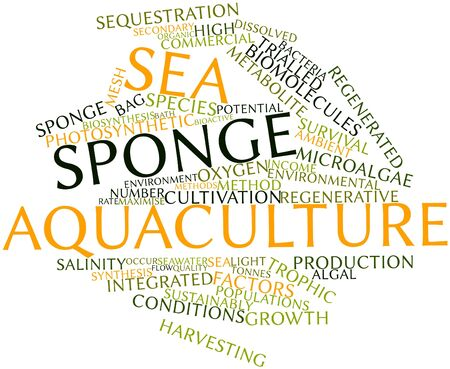 sustainably: Abstract word cloud for Sea sponge aquaculture with related tags and terms