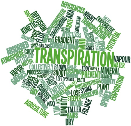 transpiration: Abstract word cloud for Transpiration with related tags and terms Stock Photo