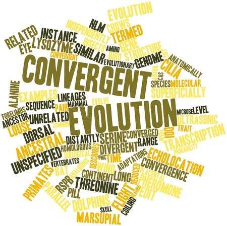 converged: Abstract word cloud for Convergent evolution with related tags and terms