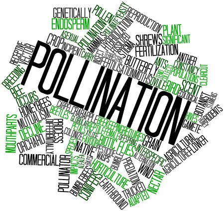 constancy: Abstract word cloud for Pollination with related tags and terms Stock Photo