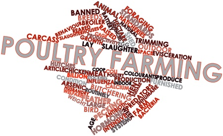 Abstract word cloud for Poultry farming with related tags and terms Stock Photo - 16499659