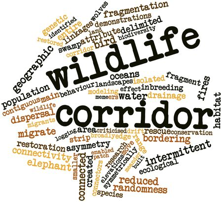 enabled: Abstract word cloud for Wildlife corridor with related tags and terms