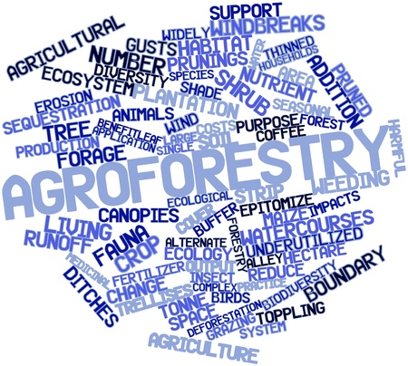 categorization: Abstract word cloud for Agroforestry with related tags and terms Stock Photo