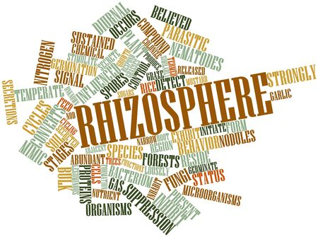 Abstract word cloud for Rhizosphere with related tags and terms Stock Photo - 16502278