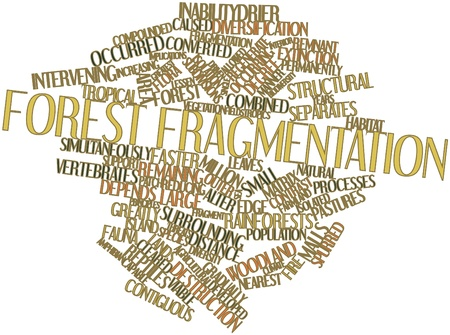 Abstract word cloud for Forest fragmentation with related tags and terms Stock Photo - 16560053