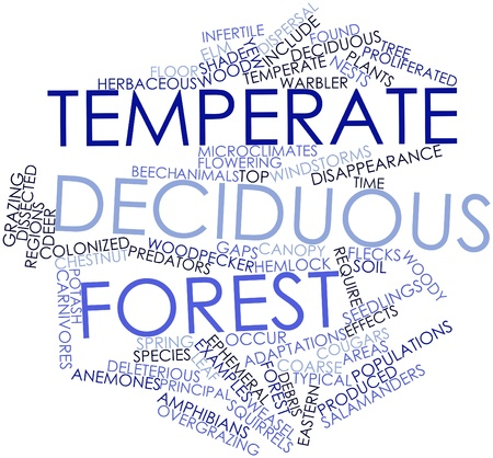 temperate: Abstract word cloud for Temperate deciduous forest with related tags and terms