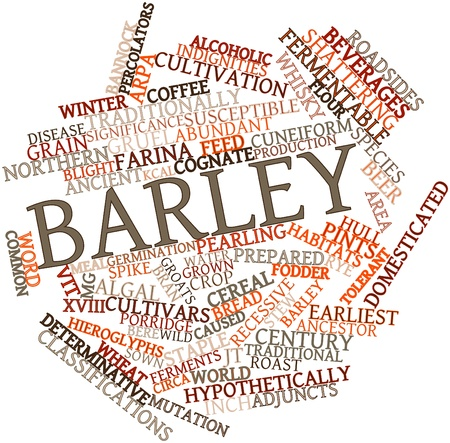 susceptible: Abstract word cloud for Barley with related tags and terms Stock Photo