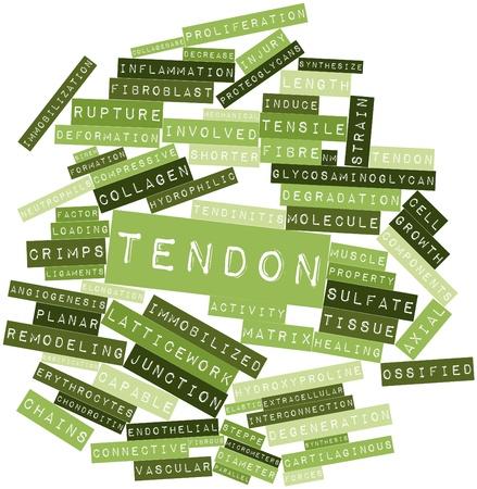 elongacion: Nube palabra abstracta para Tendon con etiquetas y términos relacionados