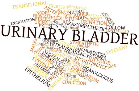 Abstract word cloud for Urinary bladder with related tags and terms Stock Photo