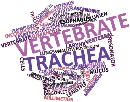 Abstract word cloud for Vertebrate trachea with related tags and terms Stock Photo - 16632299