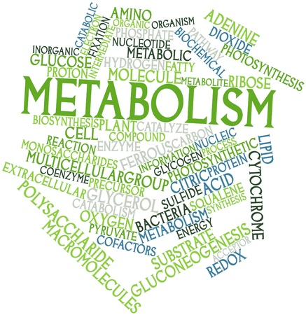 precursor: Abstract word cloud for Metabolism with related tags and terms