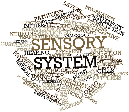 analogous: Abstract word cloud for Sensory system with related tags and terms