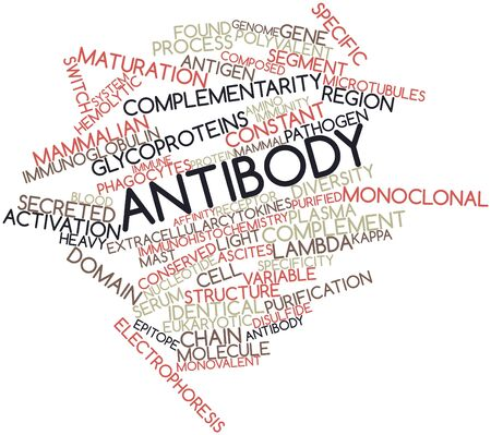extracellular: Abstract word cloud for Antibody with related tags and terms Stock Photo