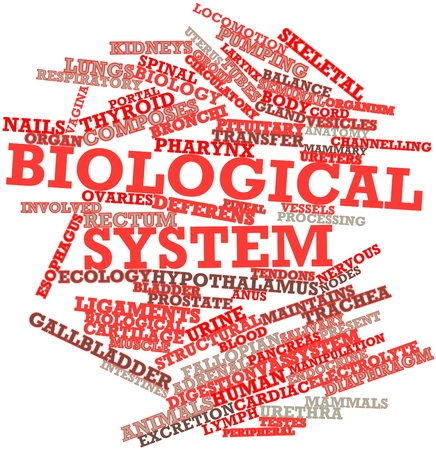 testes: Abstract word cloud for Biological system with related tags and terms Stock Photo