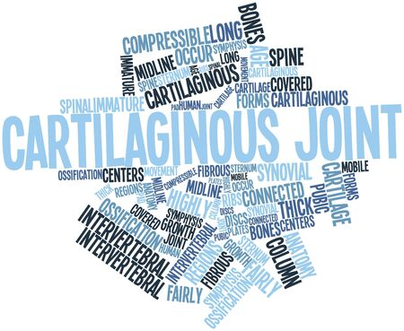 immature: Abstract word cloud for Cartilaginous joint with related tags and terms