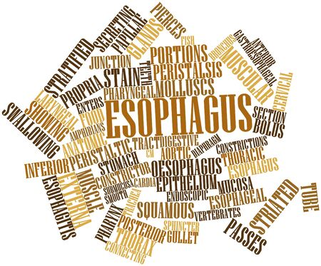 esophagus: Abstract word cloud for Esophagus with related tags and terms