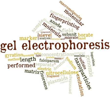 logarithm: Abstract word cloud for Gel electrophoresis with related tags and terms Stock Photo