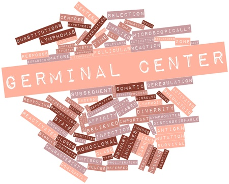 migrate: Abstract word cloud for Germinal center with related tags and terms