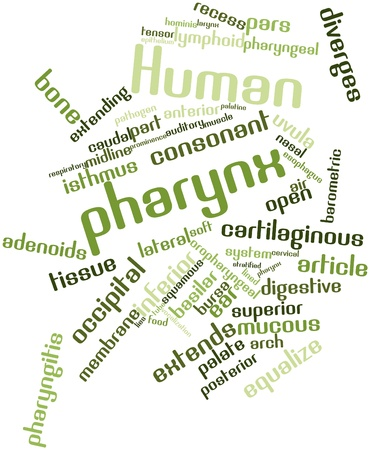 prominence: Abstract word cloud for Human pharynx with related tags and terms Stock Photo