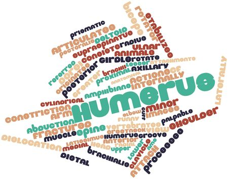 distal: Abstract word cloud for Humerus with related tags and terms Stock Photo