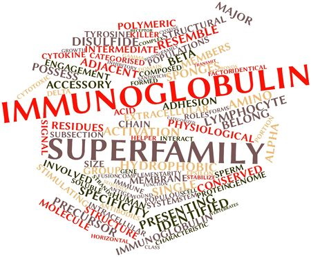 Abstract word cloud for Immunoglobulin superfamily with related tags and terms Stock Photo - 16632329