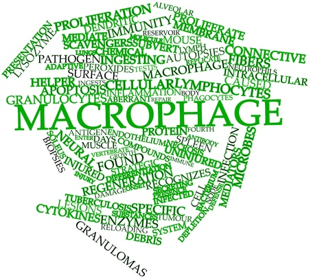necrosis: Abstract word cloud for Macrophage with related tags and terms