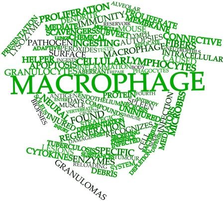apoptosis: Nube palabra abstracta por macr�fagos con etiquetas y t�rminos relacionados
