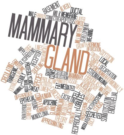 Abstract word cloud for Mammary gland with related tags and terms Stock Photo - 16633330