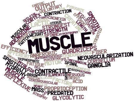 sectional: Abstract word cloud for Muscle with related tags and terms