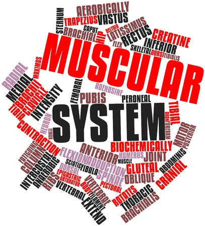 Abstract word cloud for Muscular system with related tags and terms Stock Photo - 16632497