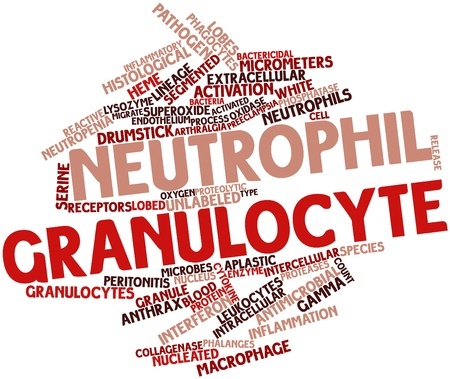 enzyme: Abstract word cloud for Neutrophil granulocyte with related tags and terms