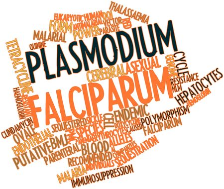 quinine: Abstract word cloud for Plasmodium falciparum with related tags and terms