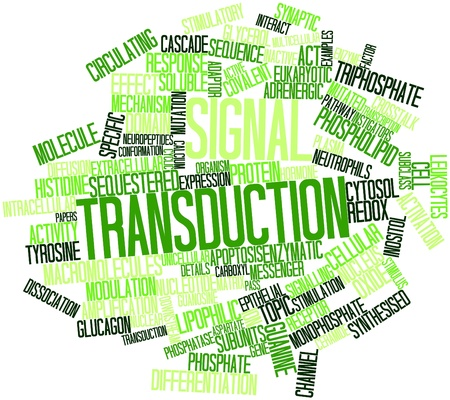 Abstract word cloud for Signal transduction with related tags and terms Stock Photo - 16633302