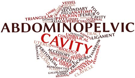 axial: Abstract word cloud for Abdominopelvic cavity with related tags and terms Stock Photo