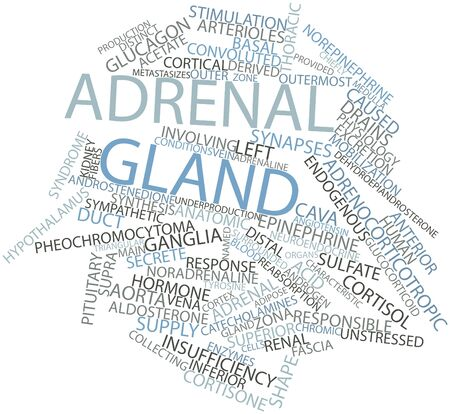 glucagon: Abstract word cloud for Adrenal gland with related tags and terms