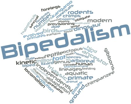 hominid: Abstract word cloud for Bipedalism with related tags and terms Stock Photo